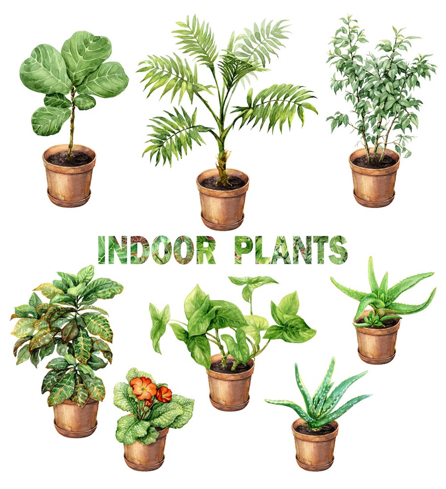 Hirt's Boxed Botany - 12 Month House Plant Subscription