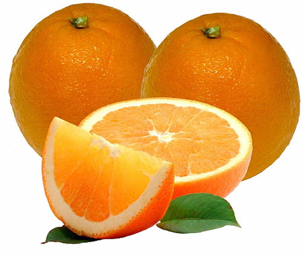 "Washington Navel Orange Tree - 5"" Pot - NO SHIPPING TO TX, FL, AZ, CA, LA, HI"