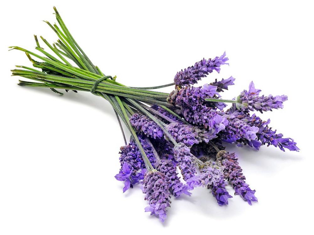Ellagance Purple Lavender 20 Seed- Blue Flower/Fragrant
