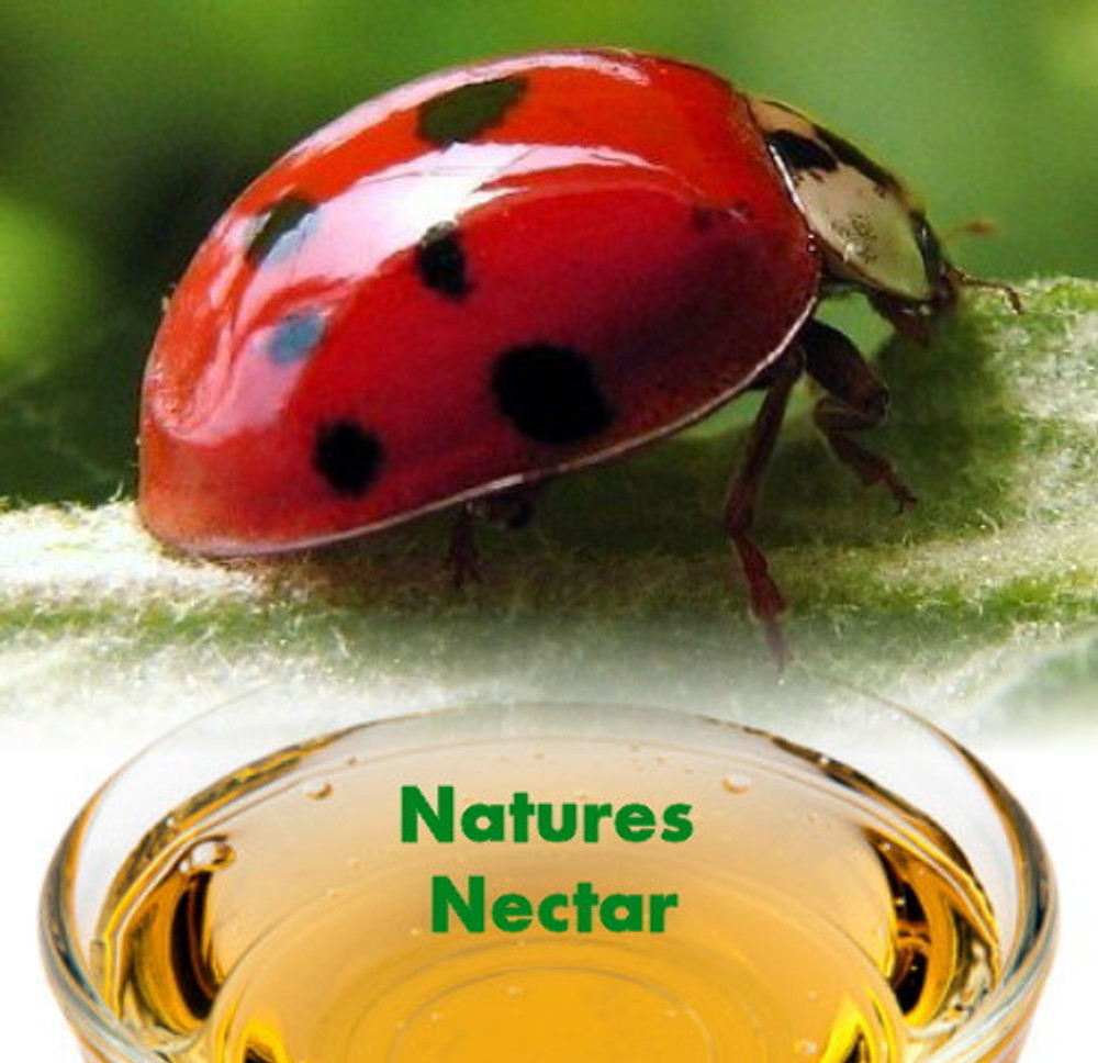 Ladybug Nectar™ - 8 Ounces - Attracts & Keeps Beneficial Insects in the Garden