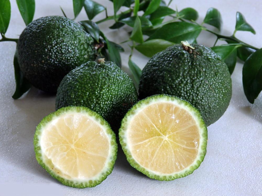"Australian Round Lime Tree- Fruiting Size - 5"" Pot- NO SHIP to TX,FL,AZ,CA,LA,HI"
