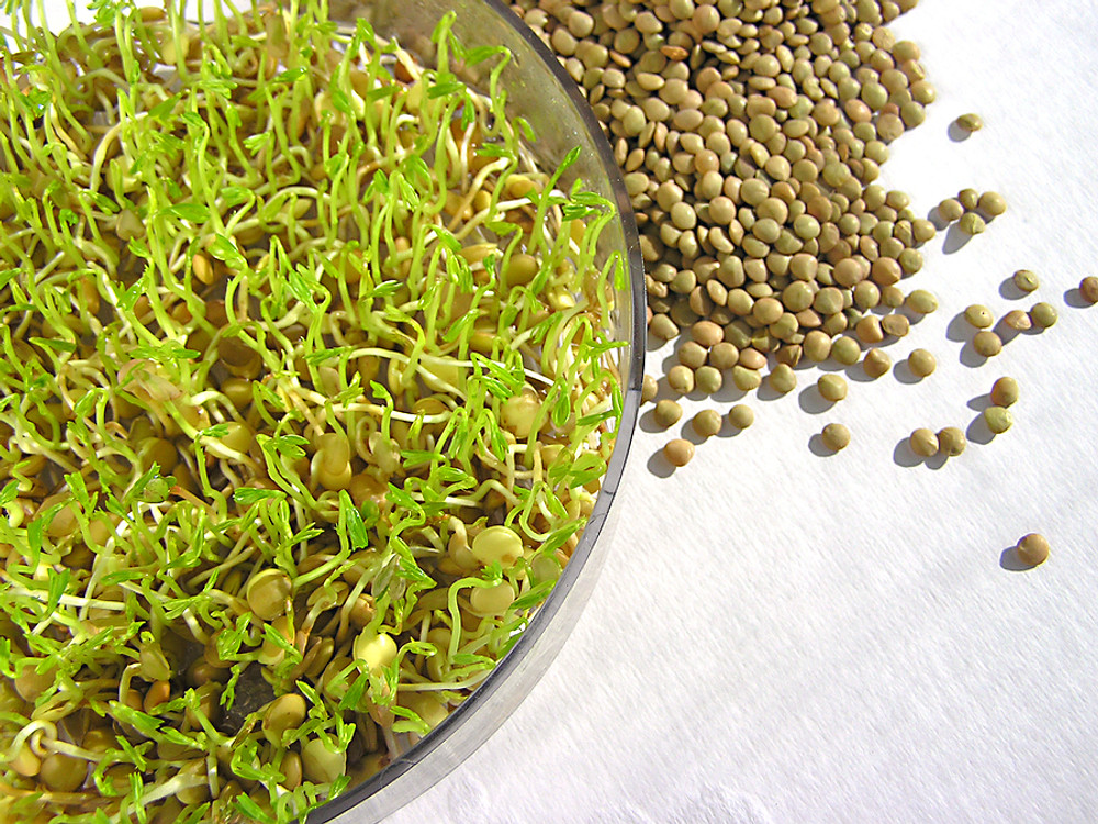 Zesty Salad & Sandwich Mix Sprouting Seeds - 4 ounces