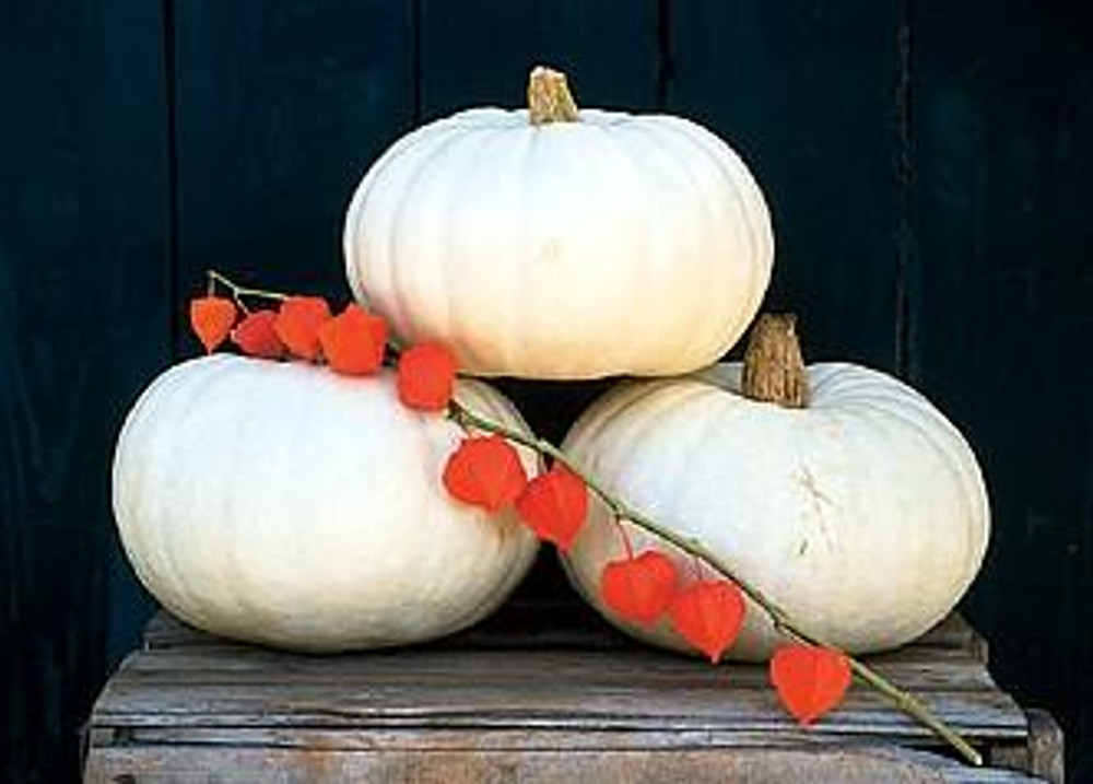 Snow White Valenciano Pumpkin 15 Seeds - Show or Eat!