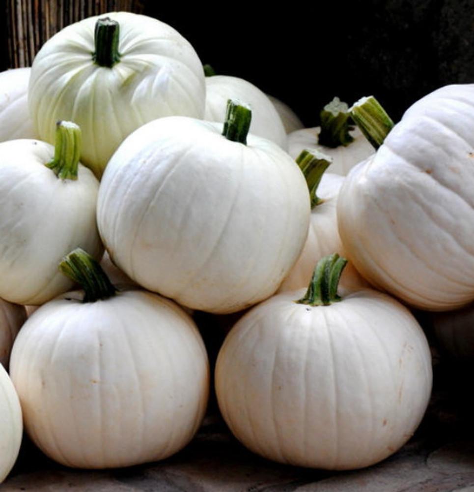 Cotton Candy Pumpkin 10 Seeds - NEW