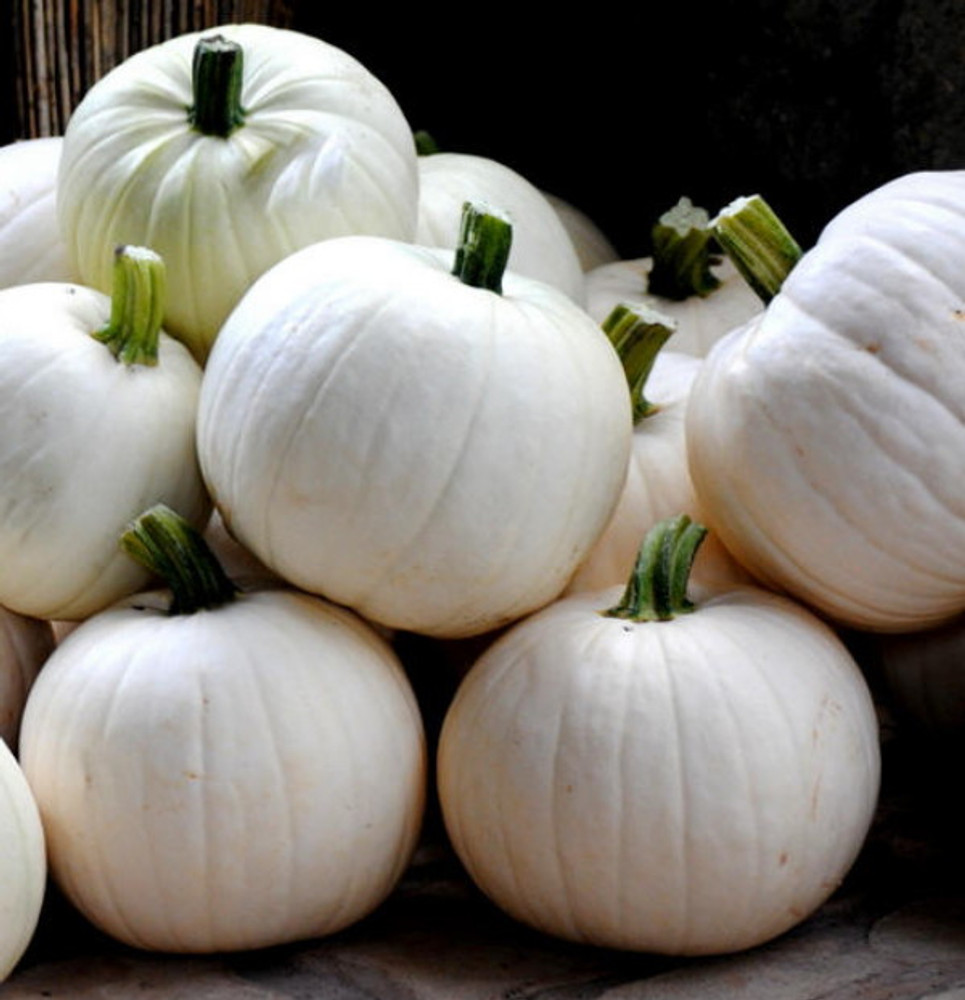 Cotton Candy Pumpkin 10 Seeds - NEW