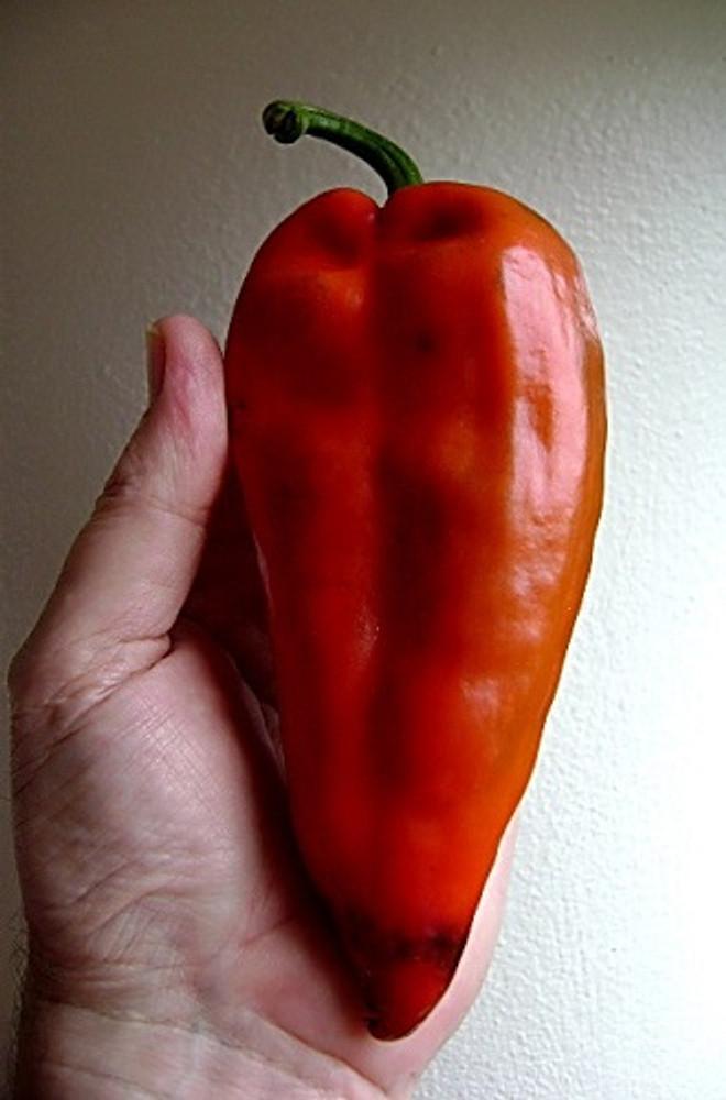 Monster Hot Chili Pepper - 10 Seeds