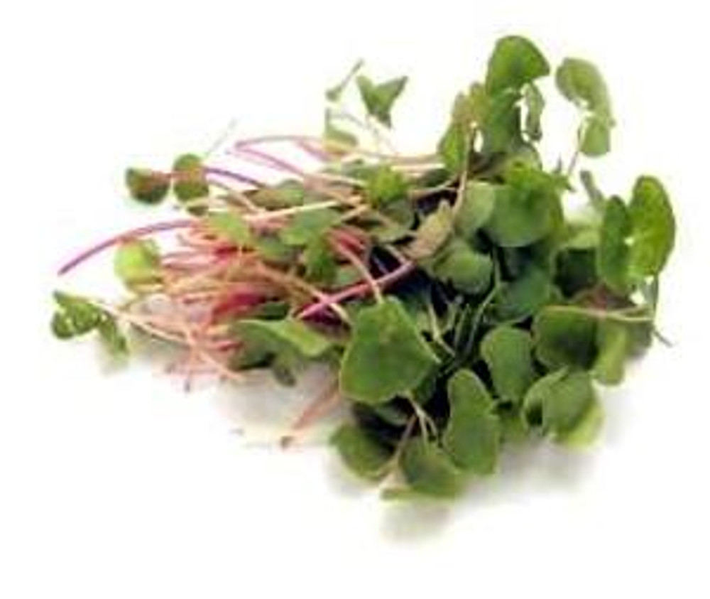 Buckwheat Sprouting Seeds -4 ounces- Mild Taste