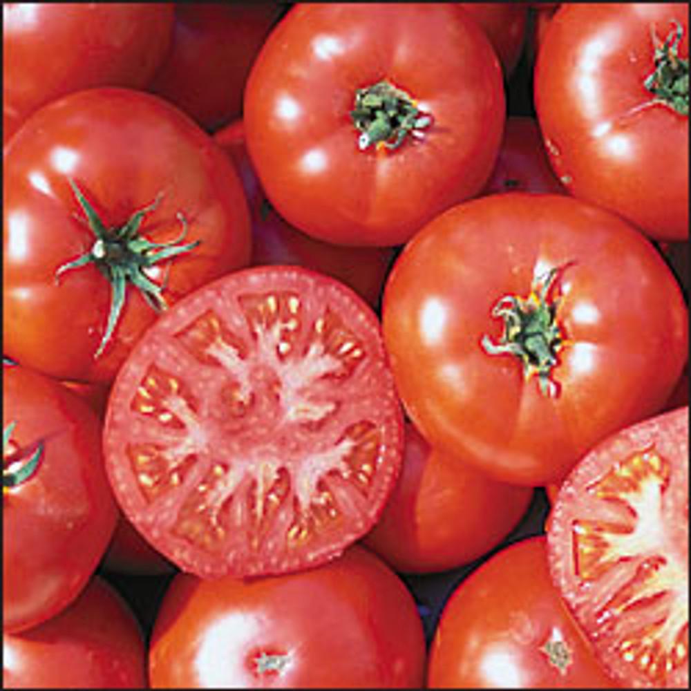 Trophy Tomato - 20 Seeds - Rhode Island Heirloom