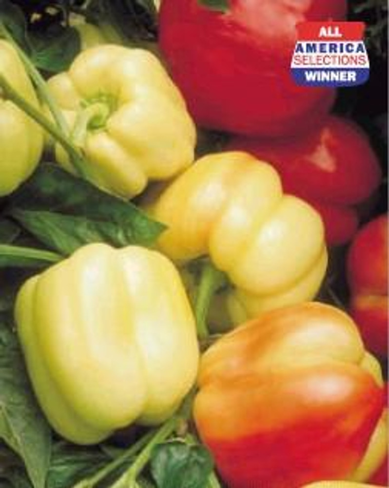 Blushing Beauty Sweet Pepper - 10 Seeds - Ivory to Red