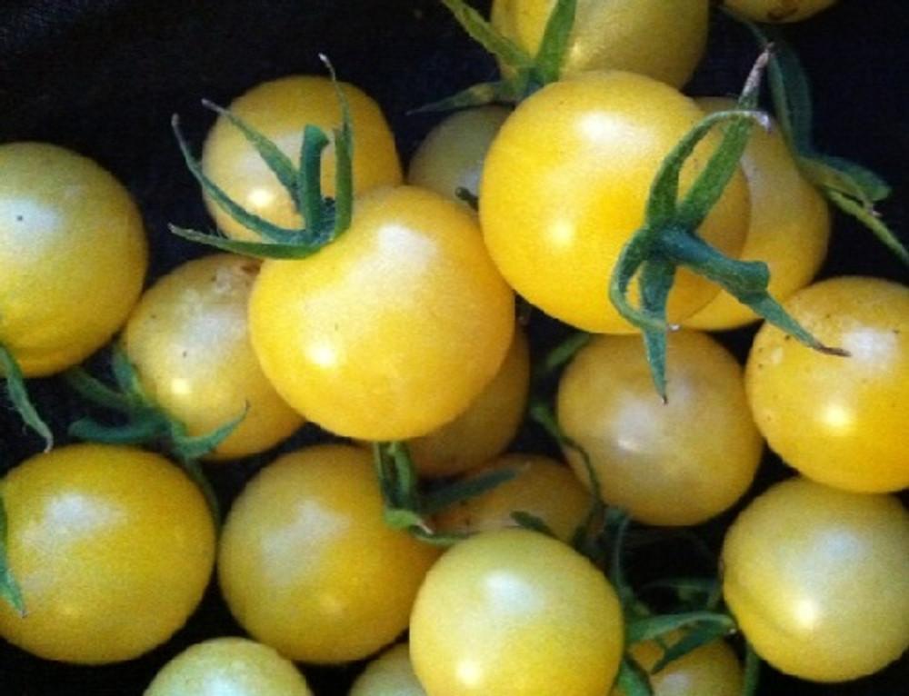 Lollipop Tomato 25 Seeds - NEW - LEMONY FLAVOR!