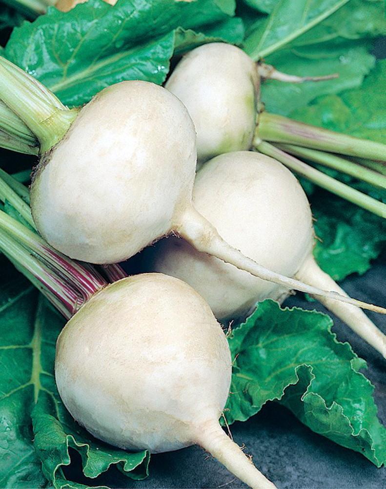 Blankoma White Beet 100 Seeds- White Flesh-Sweet-Veggie