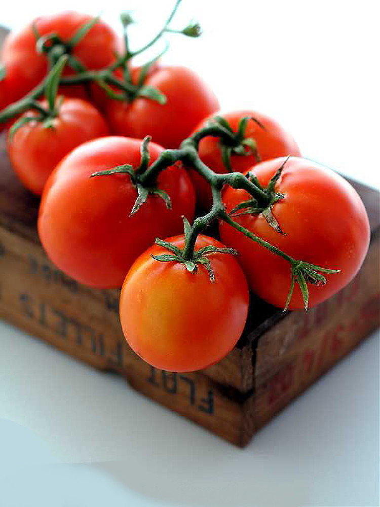 New Yorker Tomato 35 Seeds - Bush Beefsteak Type