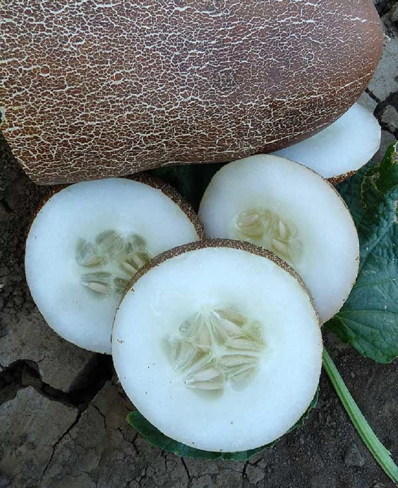 Brown Russian Cucumber - 10 Seeds