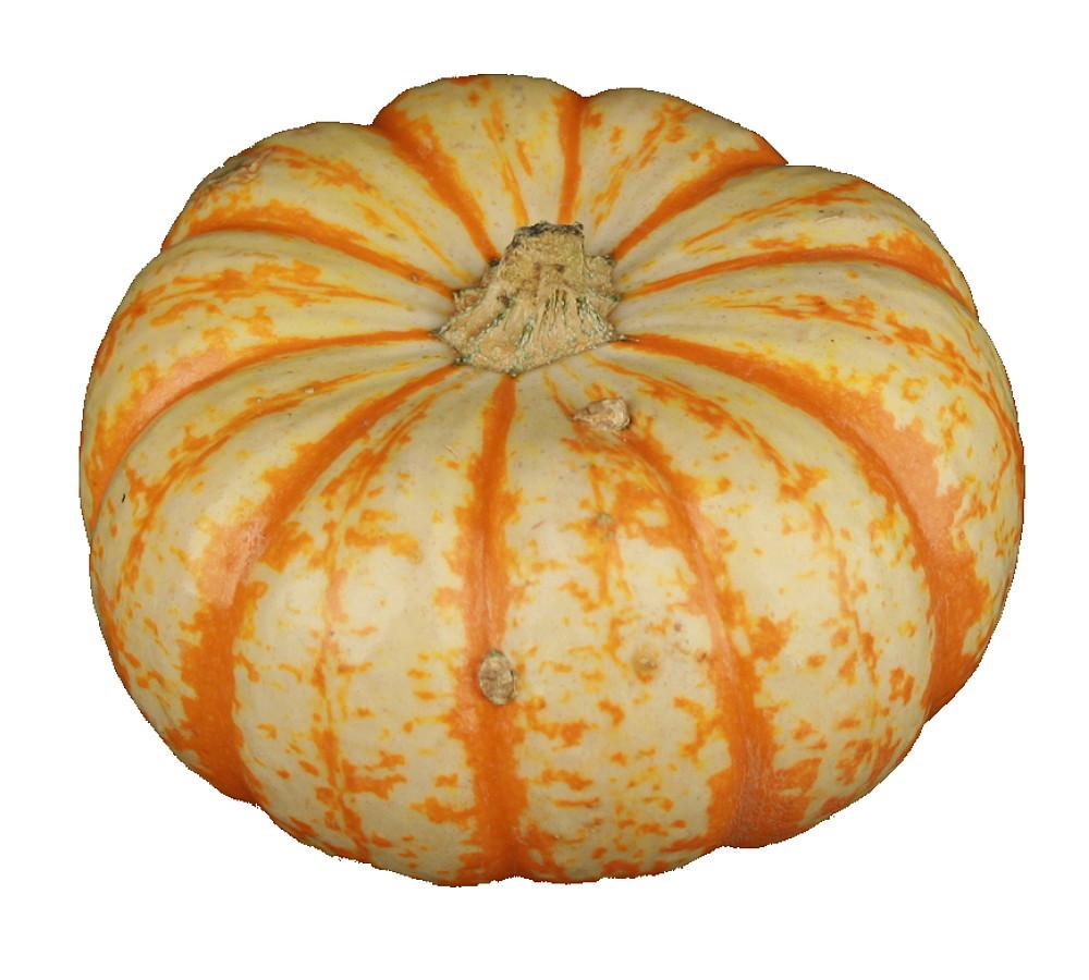 Microwaveable Mini Pumpkin - 6 Seeds