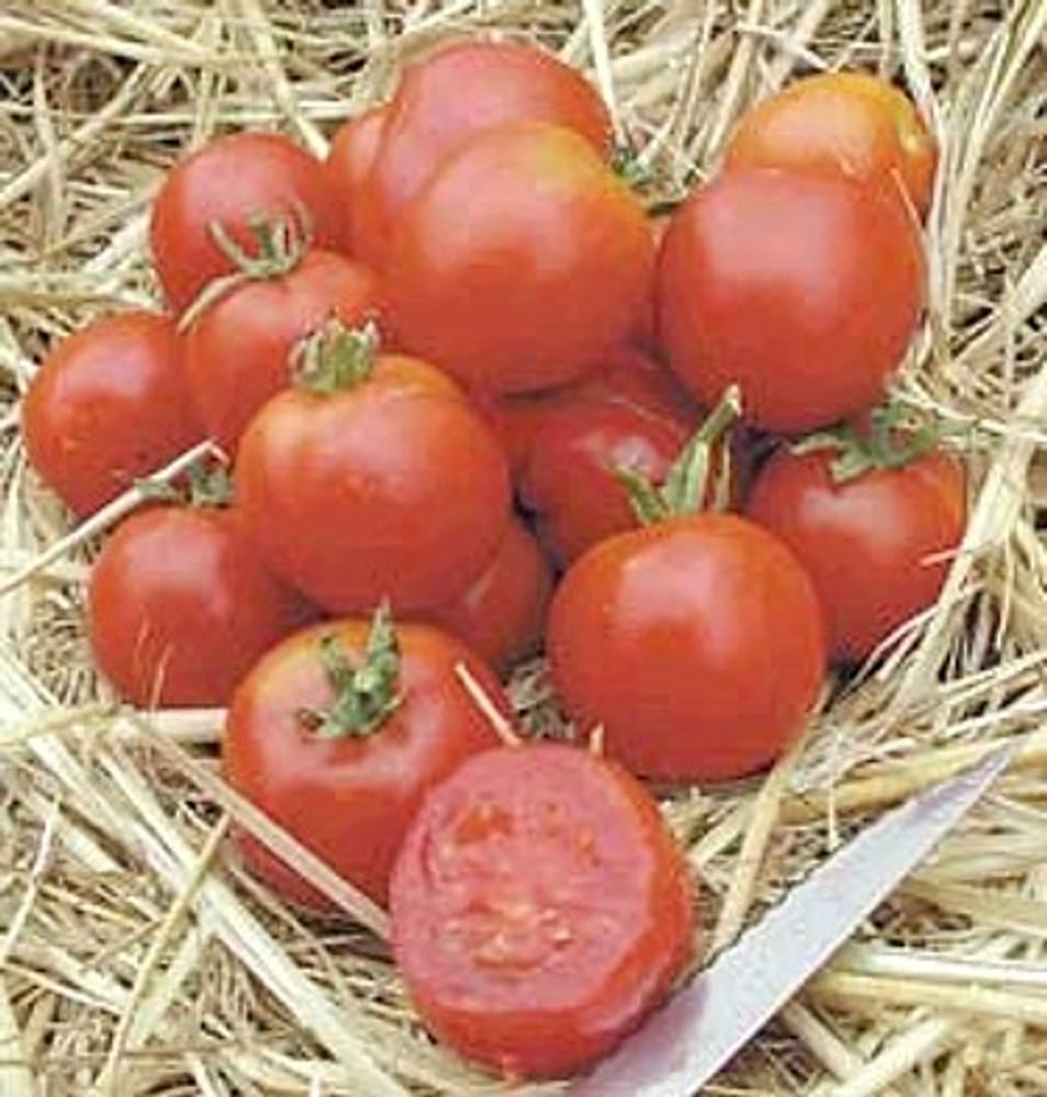Stupice Czechleslovakian Tomato 15 Seeds - Heirloom