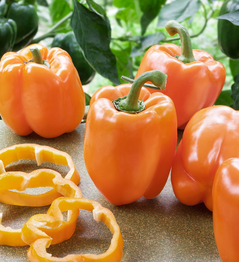 Orange Blaze Sweet Pepper - 10 Seeds - All America Selections Winner