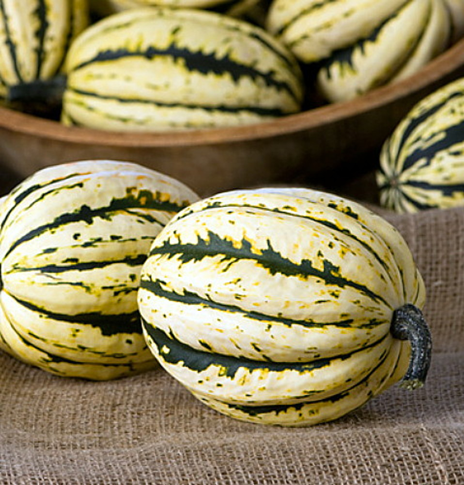 Jester Striped Acorn Winter Squash - 20 Seeds