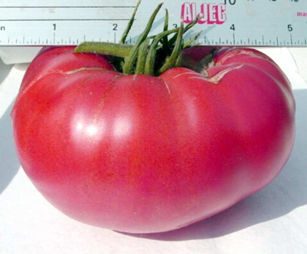 Tiffen Mennonite Tomato - 20 Seeds - Pink Beefsteak