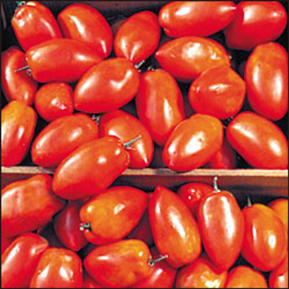 Spitze Tomato - 20 Seeds - Romanian Paste Tomato