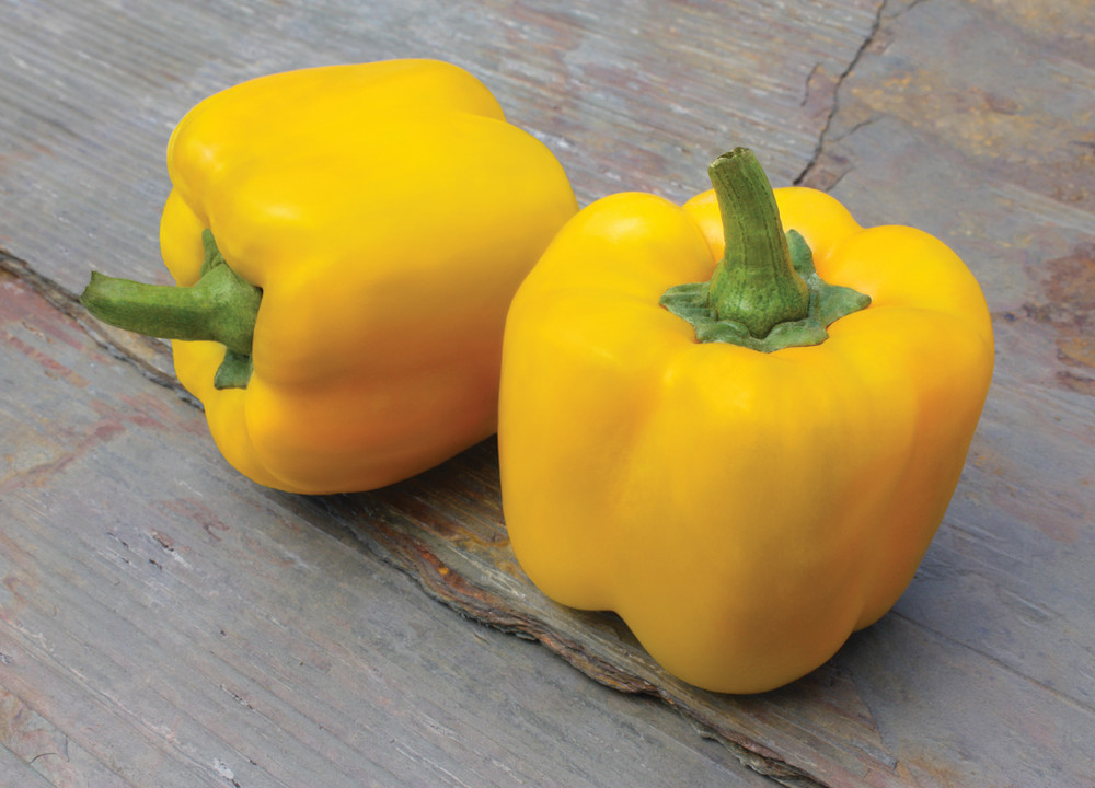 Sweet Early Summer Yellow Pepper - 10 Seeds