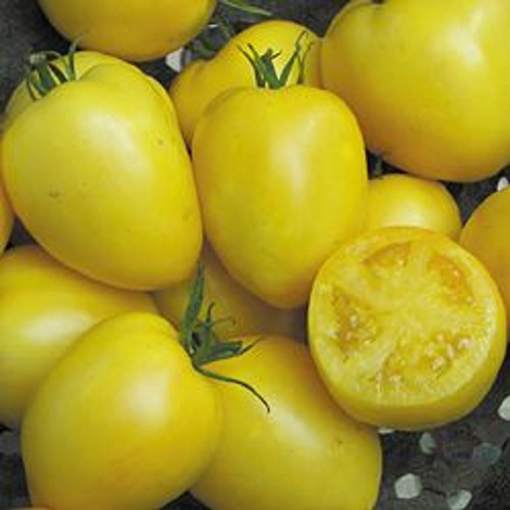Powers Heirloom Tomato - 20 Seeds - Yellow Paste