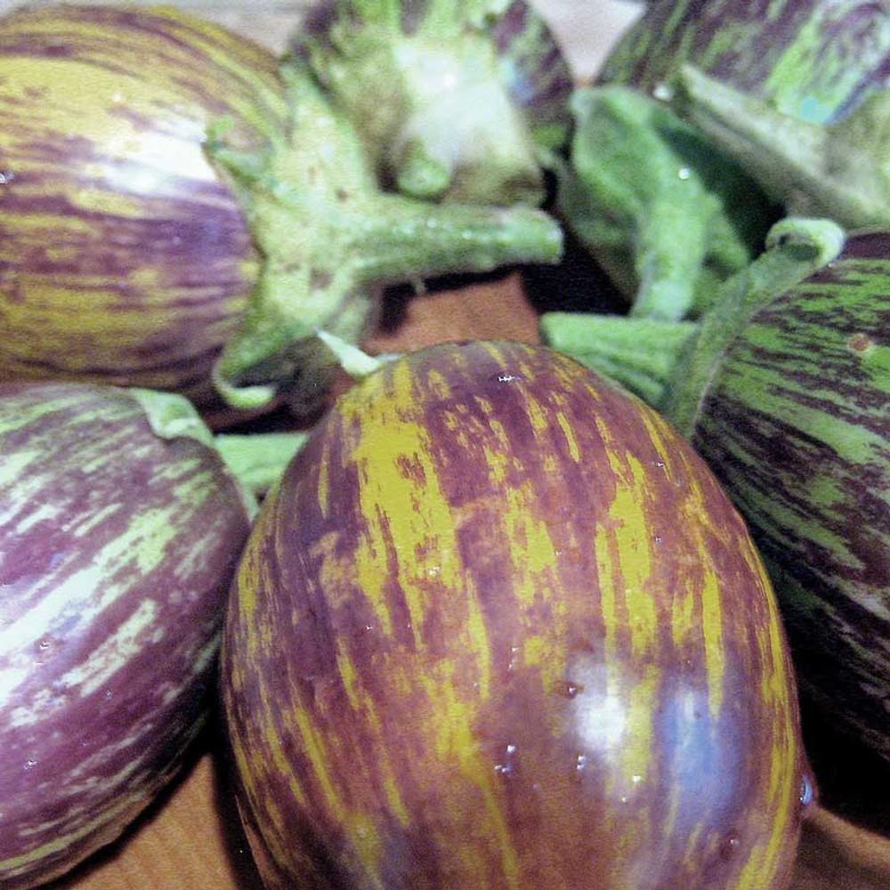 Udumalapet Eggplant 25 Seeds