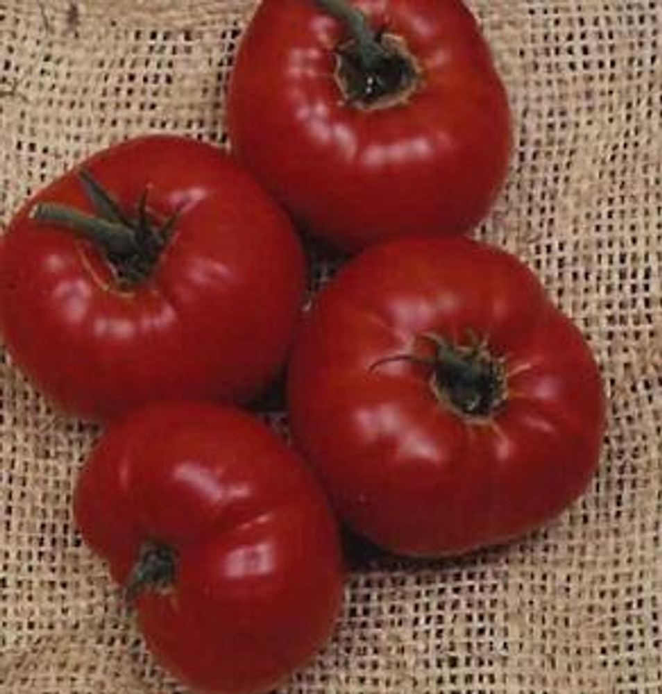 Coustralee Tomato - 20 Seeds - French Beefsteak