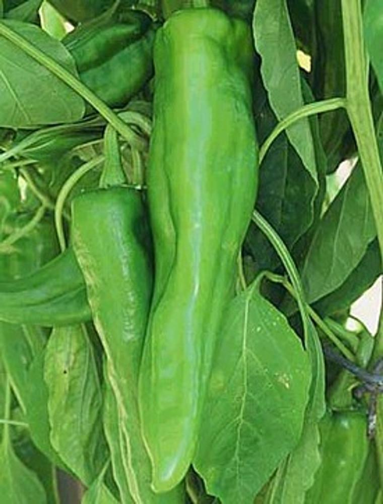 Nu Mex Joe E. Parker Chili Pepper 30 Seeds