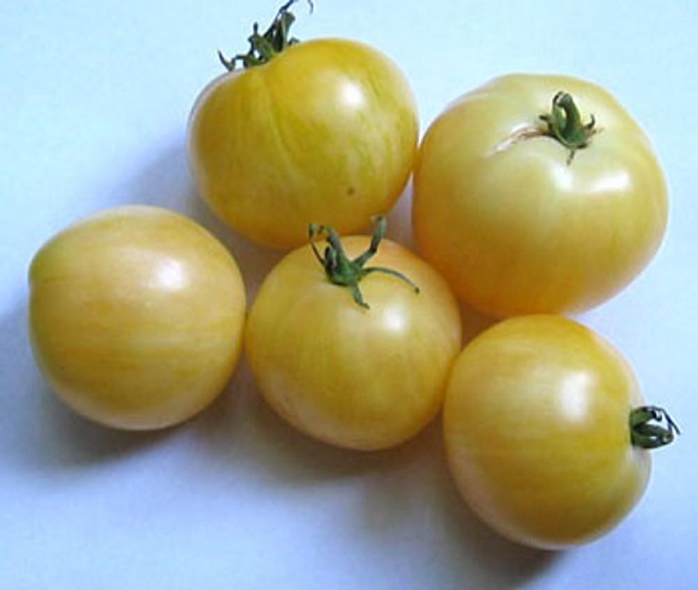 White Zebra Tomato 5 Seeds - Sweet Flavor Medium Size