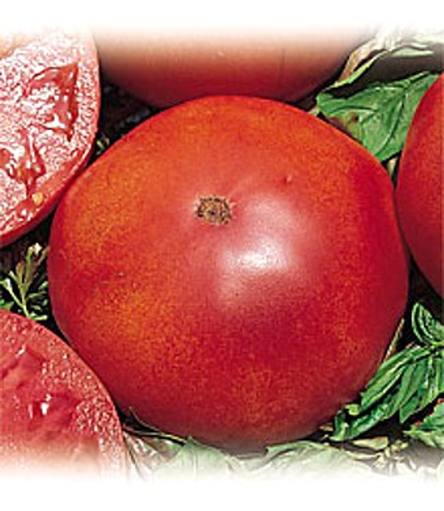 Red Brandywine Tomato 65 Seeds - Heirloom!