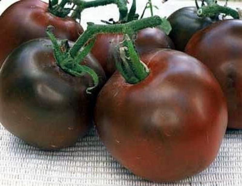 Black Prince Tomato 15 Seeds - Heirloom -From Siberia