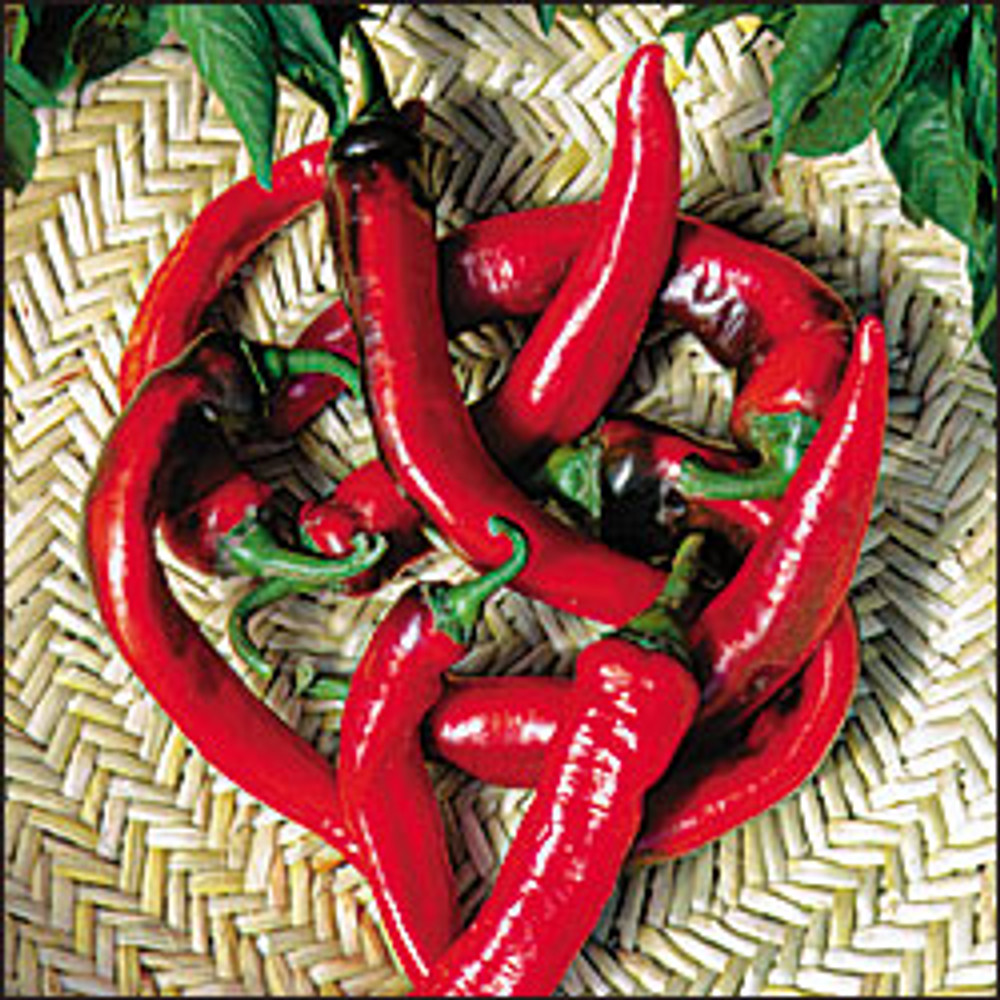 Hot Portugal Pepper - 20 Seeds - Very Hot