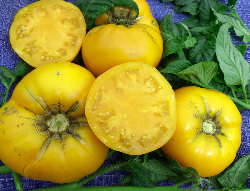 Yellow Brandywine Heirloom Tomato 30 Seeds - Naturally Grown - No GMO's