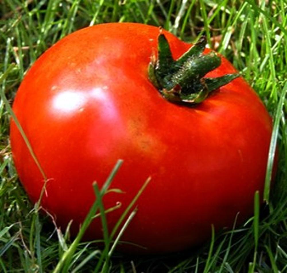 Kazakhstan Giant Tomato 10 Seeds - Borat Old Country
