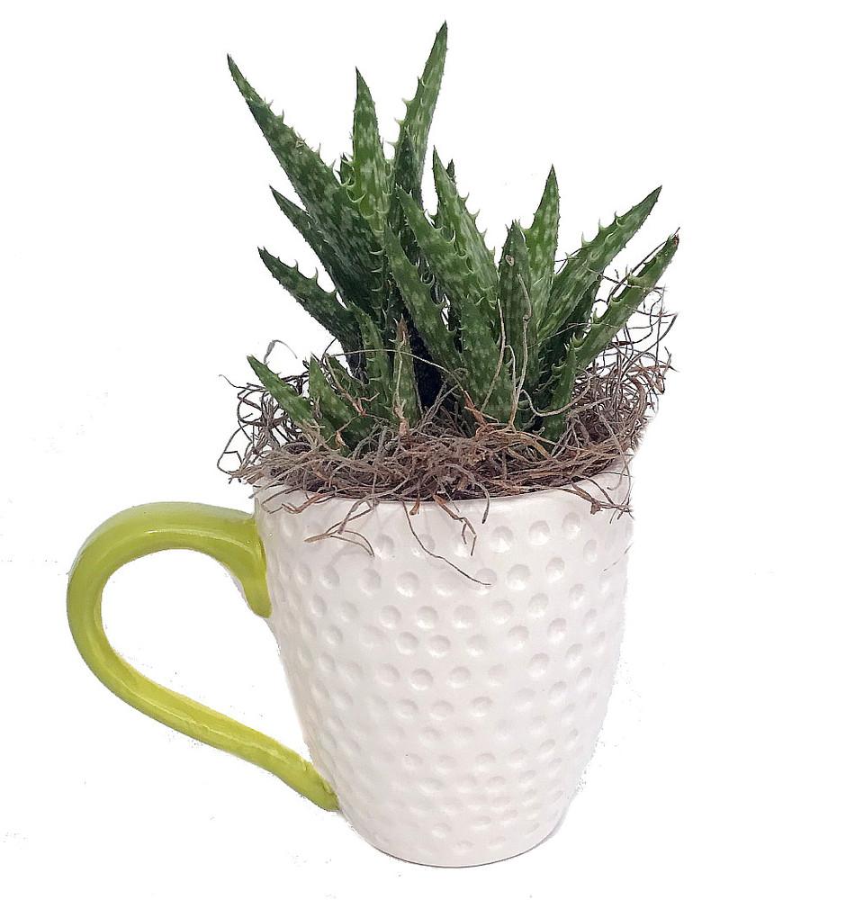 """Golf Ceramic Sports Mug Planter with Live Succulent Plant - 4"""" x 3.5"""""""