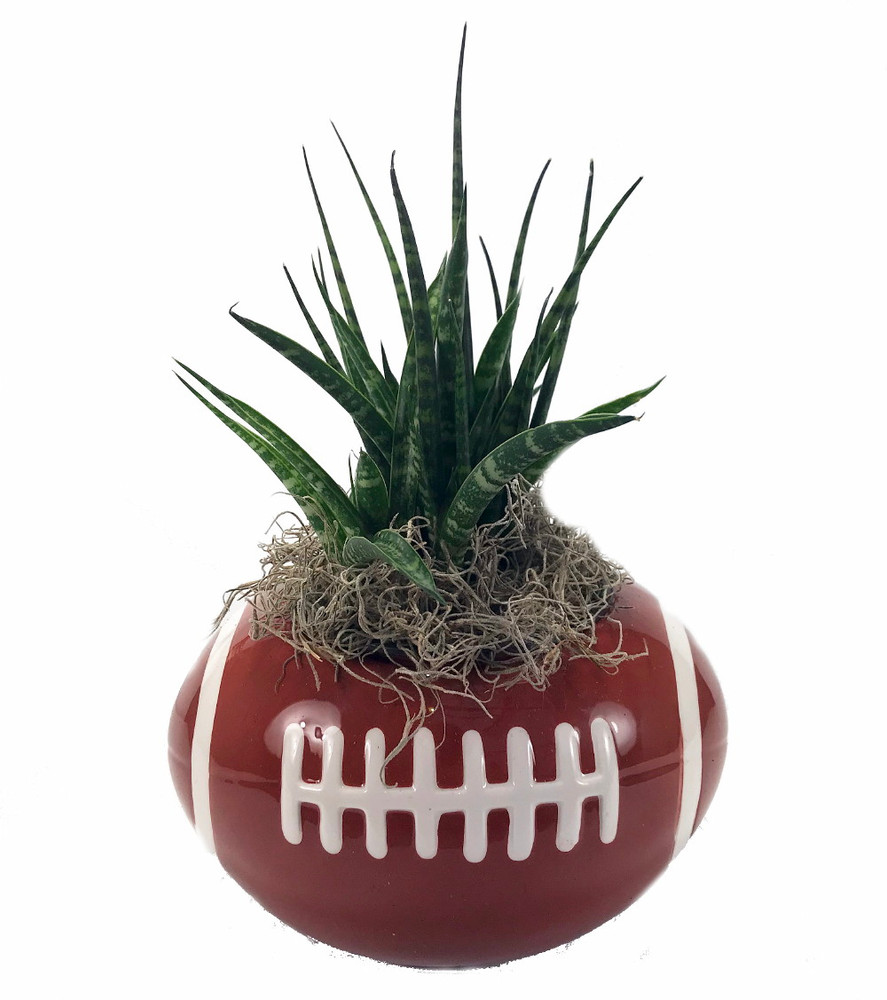 """Football Ceramic Sports Planter with Live Succulent Plant - 7"""" x 5"""" x 4"""""""