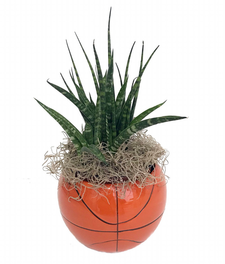 """Basketball Ceramic Sports Planter with Live Succulent Plant - 3.5"""" x 3.75"""""""