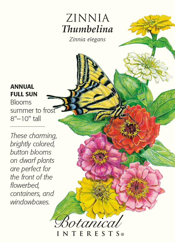 Thumbelina Zinnia Seeds - 1 gram - Annual