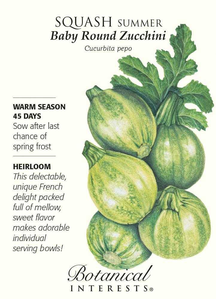 Baby Round Zucchini Summer Squash Seeds - 3 grams - Botanical Interests