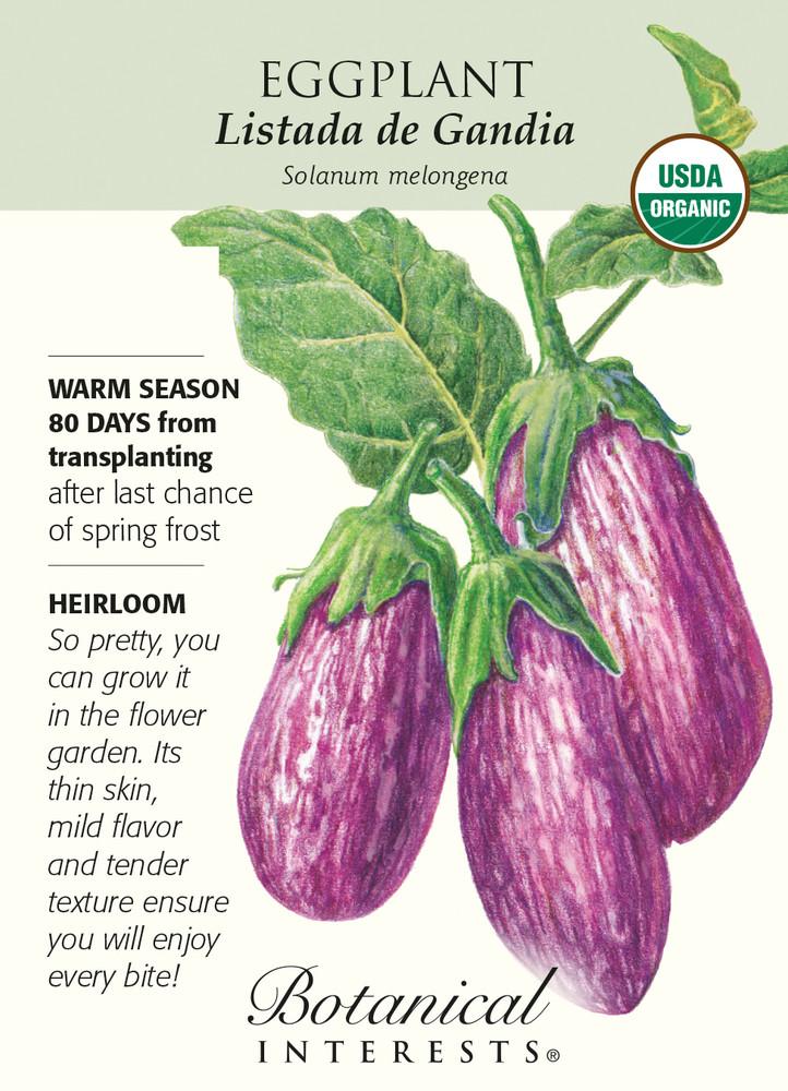 Organic - Eggplant Listada de Gandia - 25 Seeds