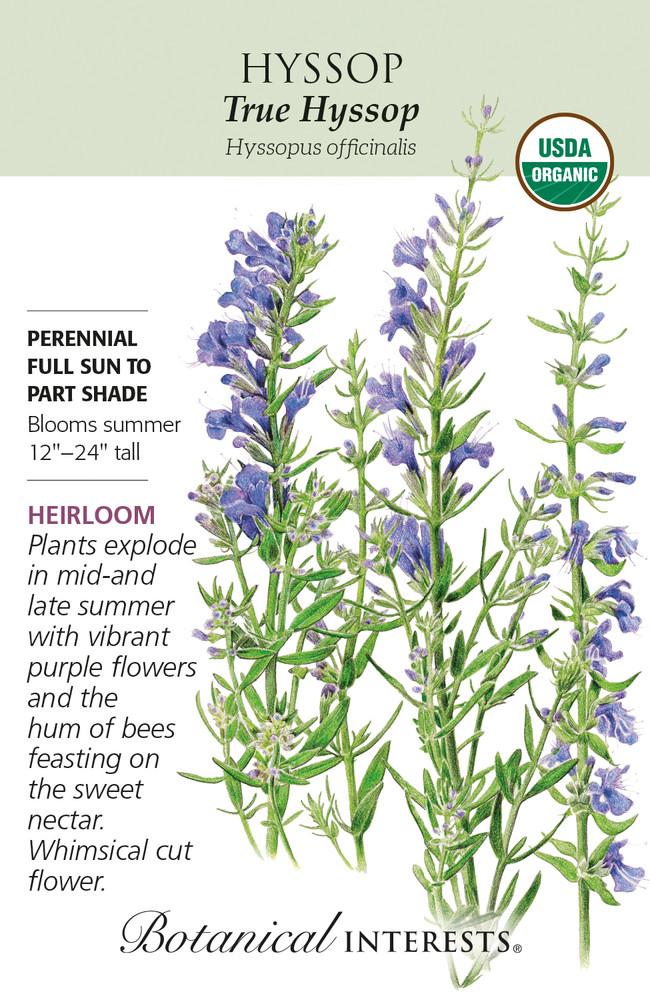 Organic True Hyssop Seeds - 150 mg - Botanical Interests