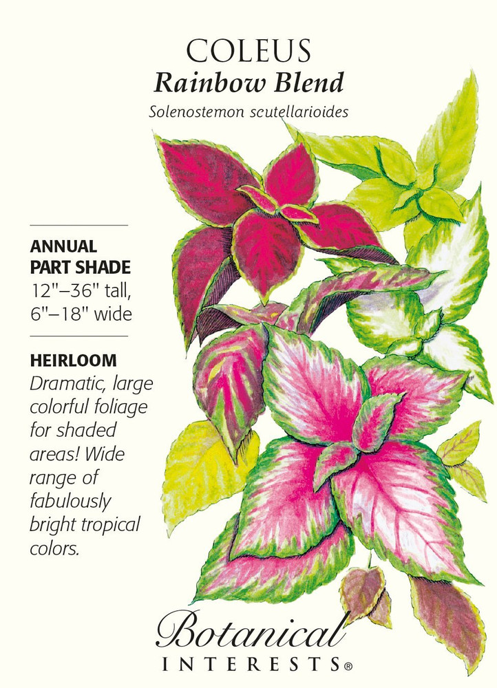 Rainbow Blend Coleus Seeds - 150 mg - Annual - Botanical Interests
