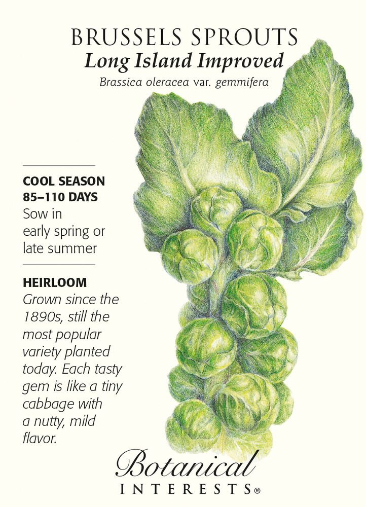 Long Island Improved Brussels Sprouts Seeds - 1 gram