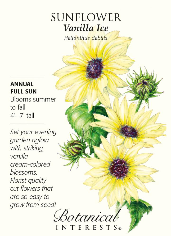 Vanilla Ice Sunflower Seeds - .50 grams - Annual