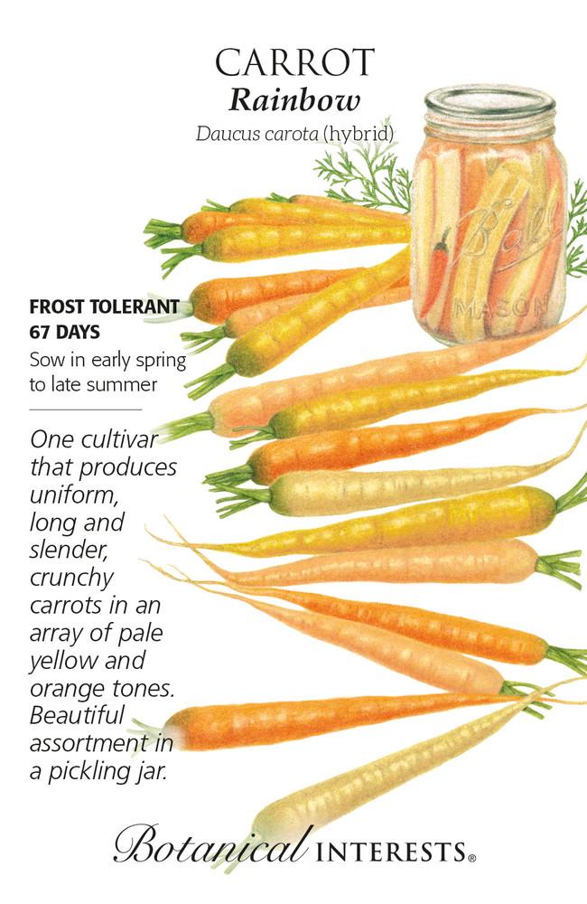 Rainbow Carrot Seeds - 400 Milligrams - Botanical Interest