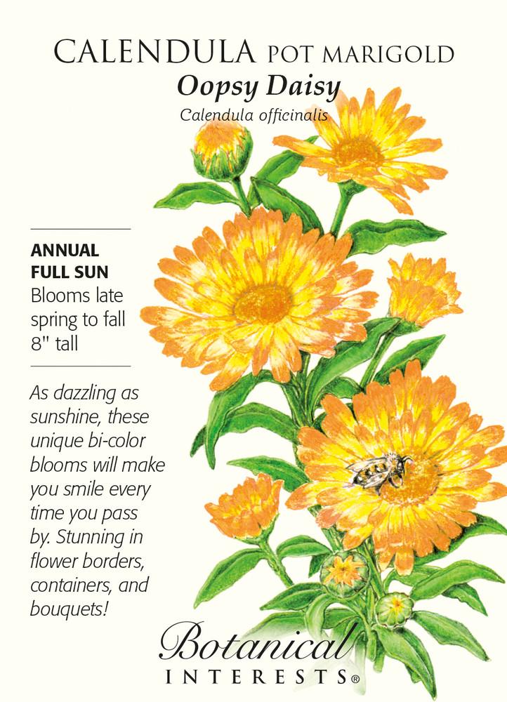 Oopsy Daisy Calendula Pot Marigold  Seeds - 700 mg
