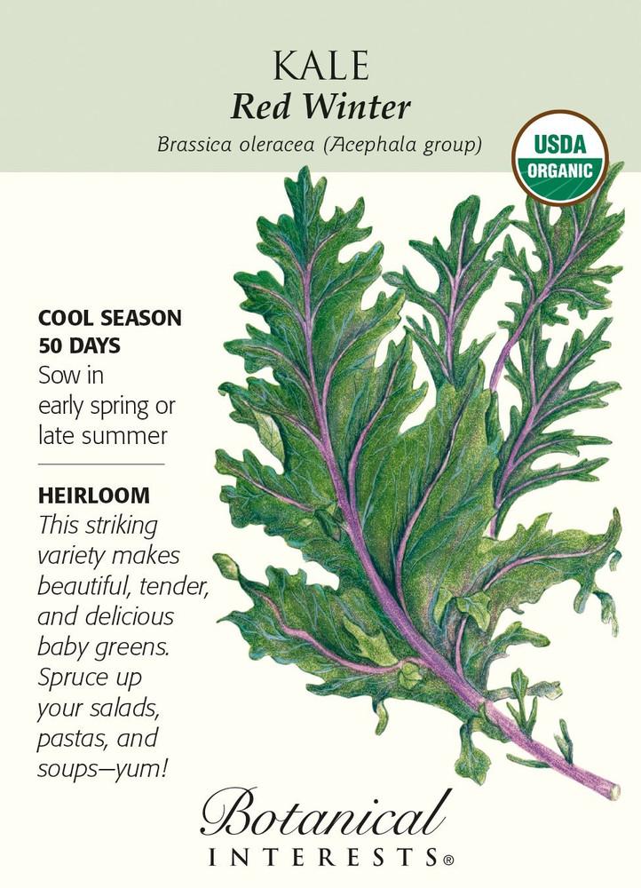 Organic Red Winter Kale Seeds - 1 gram
