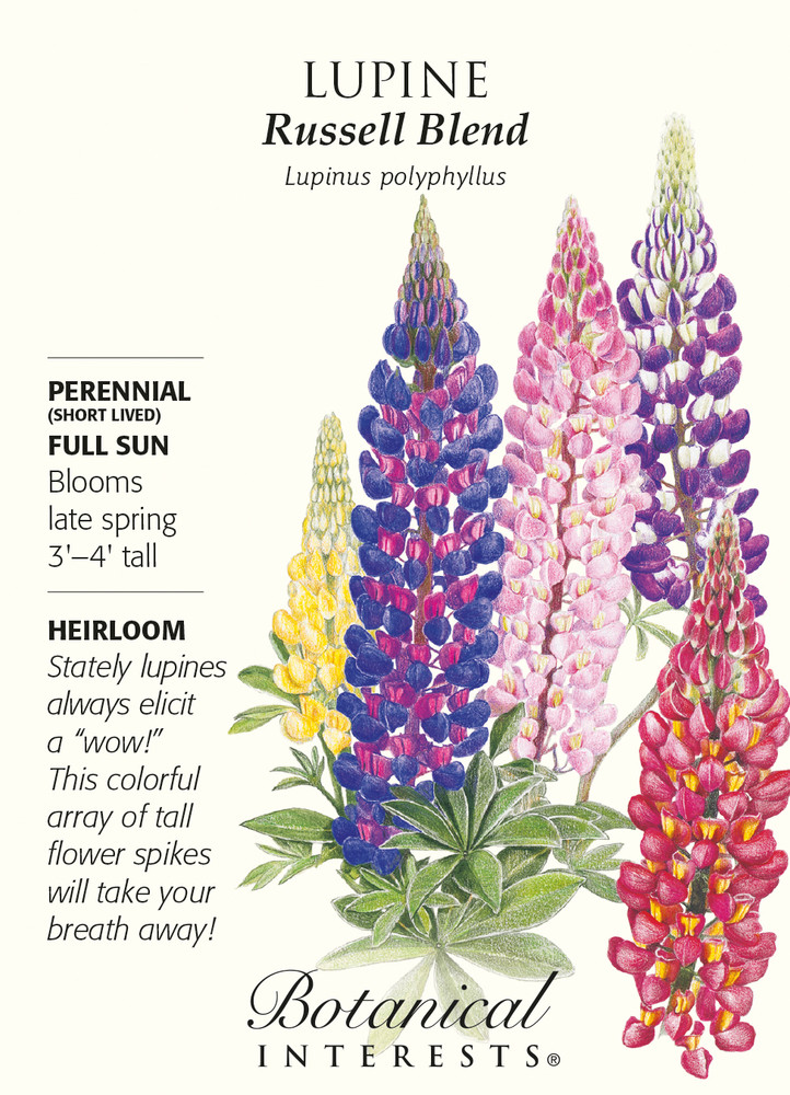 Russell Blend Lupine Seeds - 1.5 grams
