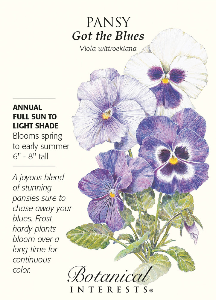 'Got the Blues' Pansy Seeds - 200 mg - Annual