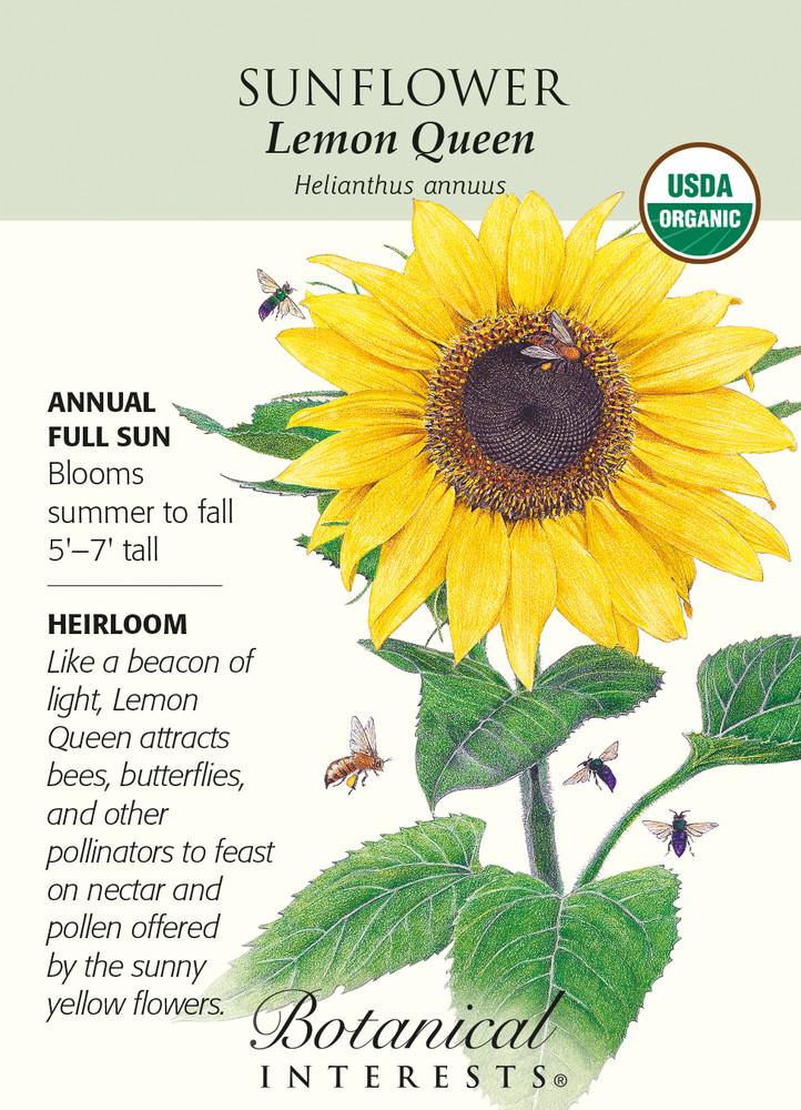 Lemon Queen Sunflower Seeds - 2 grams - Organic